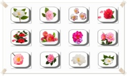 Camellia Flowers Onet Classic Game screenshot 2/3