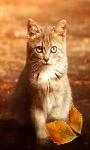 Autumn Cat Live Wallpaper screenshot 2/3