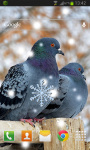 Birds Winter Live Wallpaper screenshot 2/2