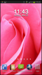 Rose Wallpapers HD v1 screenshot 1/6