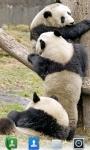 Adorable Pandas  Live Wallpaper screenshot 3/3