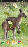 Kangaroo Australia LWP screenshot 2/2
