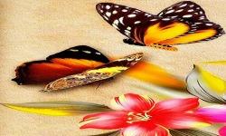Two Butterfly Live Wallpaper screenshot 2/3