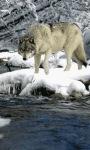 Wolf On Ice Live Wallpaper screenshot 1/3