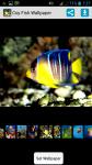Coy Fish HD Wallpaper screenshot 1/4