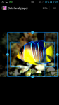 Coy Fish HD Wallpaper screenshot 3/4