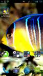 Coy Fish HD Wallpaper screenshot 4/4