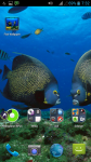 Fish HD Wallpaper For Android screenshot 4/4