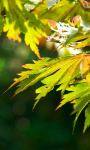 Autumn Leaves Live Wallpaper 2 screenshot 1/3