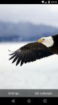 Beautiful Eagle Live Wallpaper HD screenshot 1/6