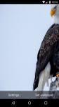 Beautiful Eagle Live Wallpaper HD screenshot 5/6