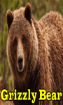 Grizzly Bear screenshot 1/3