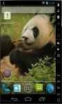 Panda Bear Live Wallpaper screenshot 2/2