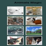 Animal wallpaper PictureGallery screenshot 1/1
