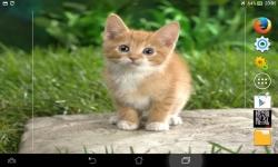 Cutest Kittens Live screenshot 1/6
