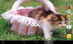 Cutest Kittens Live screenshot 2/6