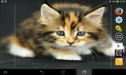 Cutest Kittens Live screenshot 3/6