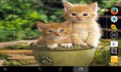 Cutest Kittens Live screenshot 4/6