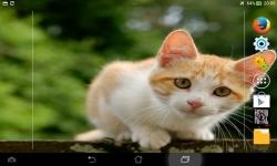 Cutest Kittens Live screenshot 5/6