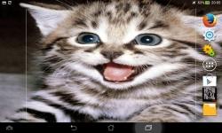 Cutest Kittens Live screenshot 6/6
