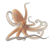 Paul Oracle Octopus screenshot 1/1