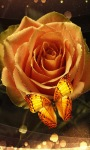 Golden Rose Butterfly LWP screenshot 2/3
