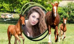 Horse Photo Frames Best screenshot 5/6
