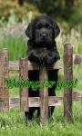 Waiting Puppy Live Wallpaper screenshot 1/3