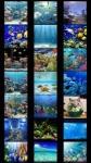 Aquarium Wallpapers by Nisavac Wallpapers screenshot 1/4