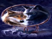 Indian Wolves Live Wallpaper screenshot 3/6