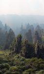 Forest HD Live Wallpaper screenshot 1/4
