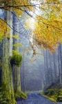Forest Sun Live Wallpaper screenshot 2/3