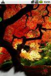 Sunny autumn screenshot 2/3