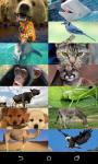 Animal Sounds Game for Kids screenshot 2/6