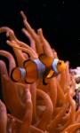 Real Clownfish in tropical aquarium screenshot 1/4