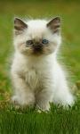 Blue Eye Cat Live Wallpaper screenshot 3/3