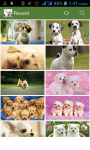 Dog Cute Wallpaper screenshot 1/3