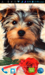 Dog Cute Wallpaper screenshot 2/3