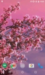 Sakura HD Video Live Wallpaper screenshot 1/4