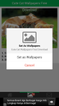 Free Download Cute Cat Wallpapers screenshot 4/6