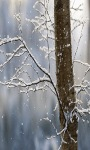 Snowy Tree Live Wallpaper screenshot 1/3
