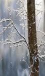 Snowy Tree Live Wallpaper screenshot 2/3