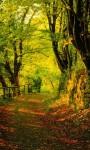 Beautiful Sunset Forest views Wallpaper screenshot 5/6