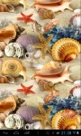 Sea Shells  Wallpapers screenshot 3/4