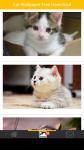 Free Download Cat Wallpaper screenshot 2/6