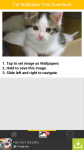 Free Download Cat Wallpaper screenshot 3/6