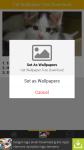 Free Download Cat Wallpaper screenshot 4/6