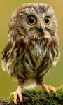 Funny Exotics Animals babies HD Wallpaper screenshot 1/6