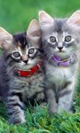 Funny Exotics Animals babies HD Wallpaper screenshot 2/6