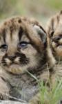 Funny Exotics Animals babies HD Wallpaper screenshot 5/6